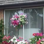 Hanging basket and windowbox