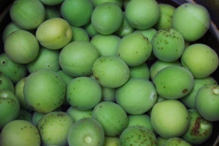 春の青い果物一覧!