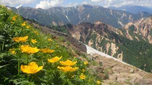 山の花の記憶 ④シナノキンバイ