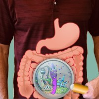 Your Gut Microbiome, the Second Brain