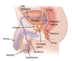 Dűne cystitis