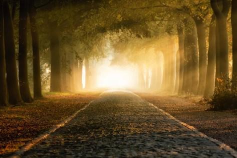 Light on pathway through trees
