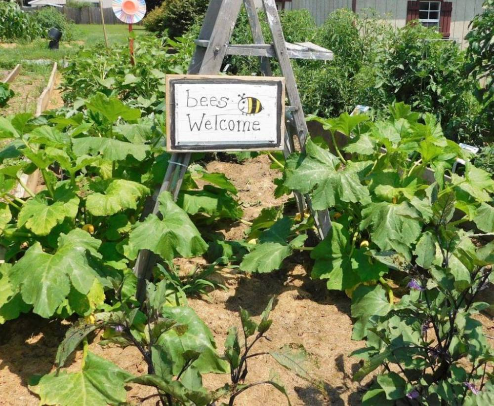 Bees are always welcome in our vegetable garden!