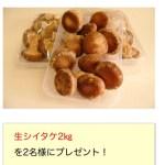 懸賞ブログ_1/16 懸賞情報 生シイタケプレゼント