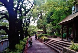 Edogawa walking path – a few weeks too late for cherry blossom season