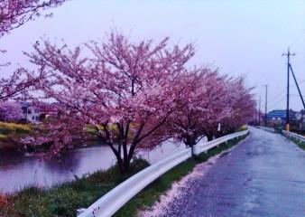 Hanami River near Katsatudai and Owada