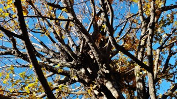 Koenji temple old tree knot