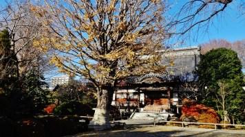 Koenji temple old tree