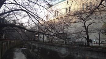 Meguro River in the winter