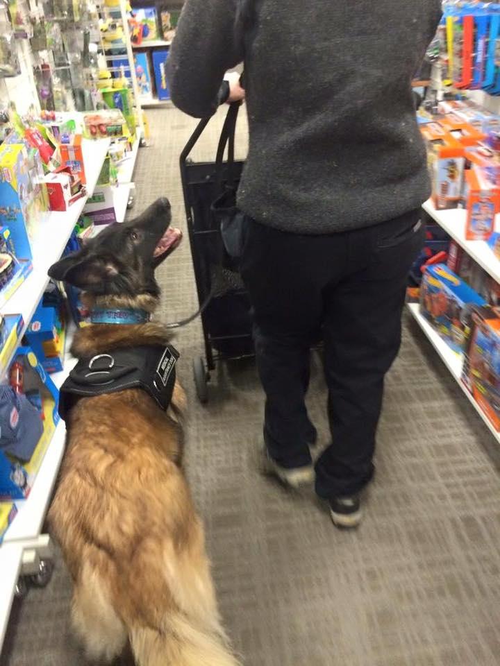 terv service dog