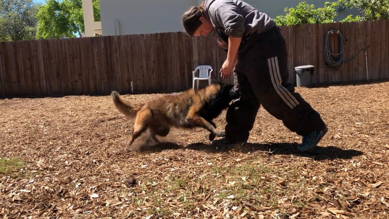 Dog-biting