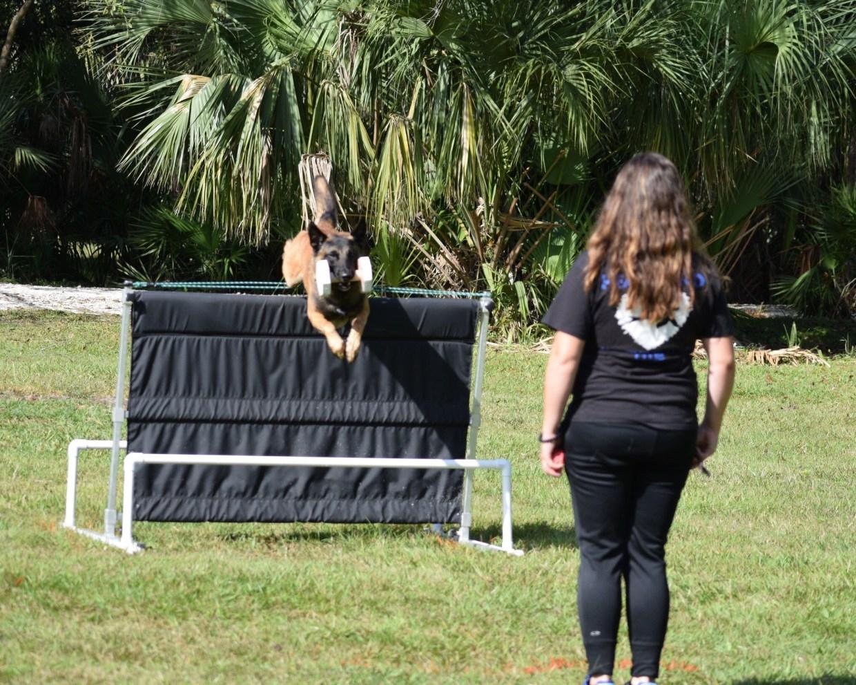 Dog-jumping