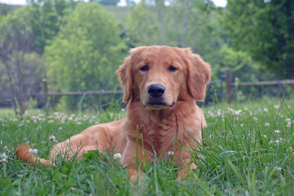 Professional Dog Training Success | Tattle