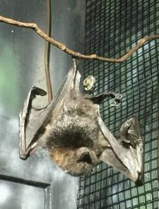zoo bat