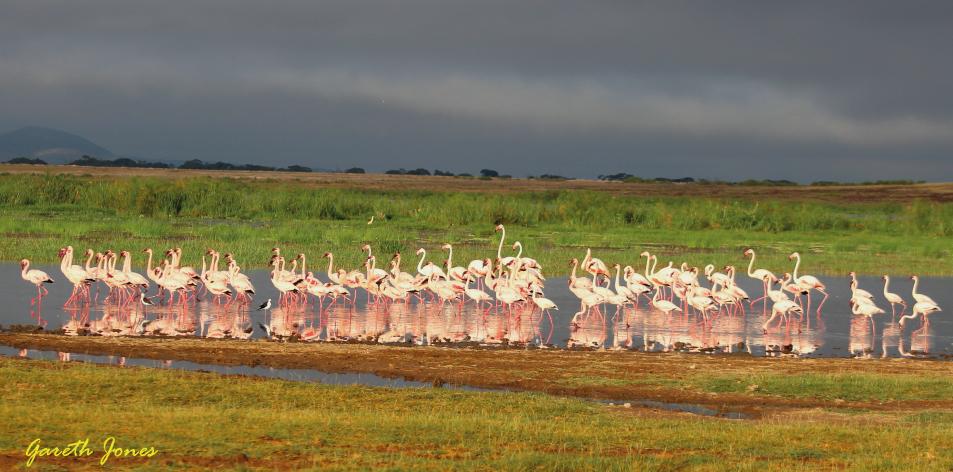 Enjoying Your Family Safari