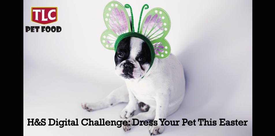 Dress you pet