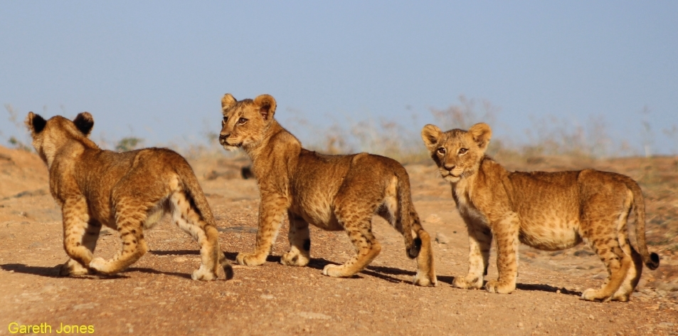 cubs are cute