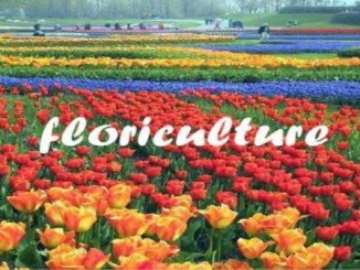 Best Colleges offering Certificate & Diploma in Floriculture & Horticulture