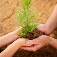 Best Tree Germplasm Technology Colleges - Certificate & Diploma Course