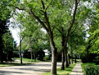Best Urban Forestry and Landscaping Colleges - Certificate & Diploma