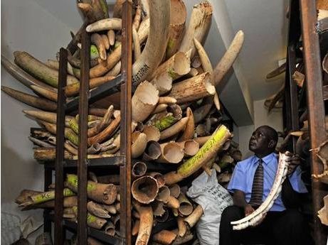 Blood money: Attacks such as last month's Westgate mall siege in Nairobi are funded by the trade in ivory