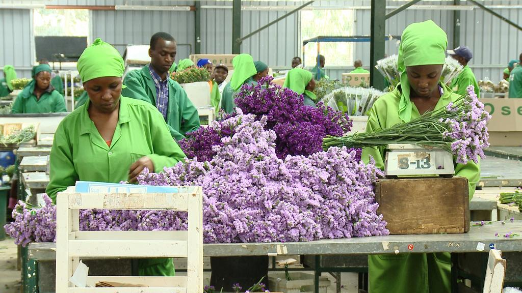 Kenya's Horticulture Exports Earnings Jump to KSh39.4 Billion in Q1 2021
