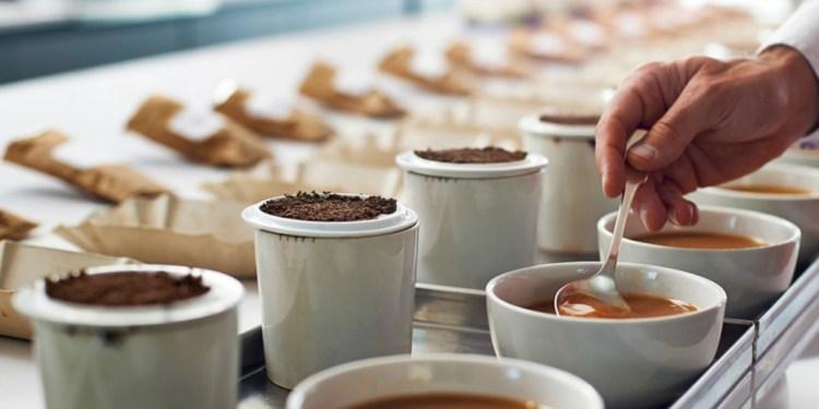 Tea Auction Records Slight Decrease in Prices