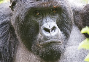 3 Days Uganda Gorilla Safari Tour Mgahinga