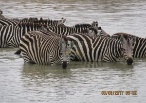6 Days Maasai Mara Kenya Safari – Nakuru & Samburu Game Reserves