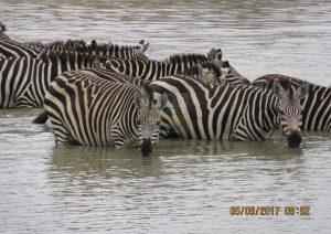 6 Days Maasai Mara Kenya Safari – Nakuru & Samburu Game Reserves