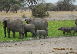 4 Days Maasai Mara & Lake Nakuru Kenya Wildlife Safari