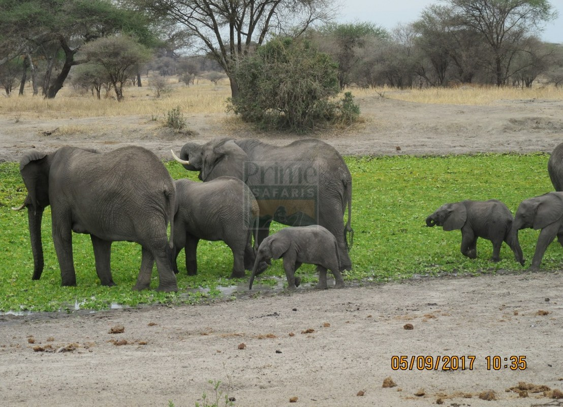 4 Days Maasai Mara & Lake Nakuru Kenya Wildlife Safari