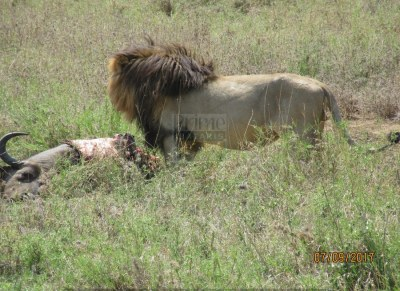 9 Days Kenya Wildlife Safari Tour to greatest Wildlife Destinations