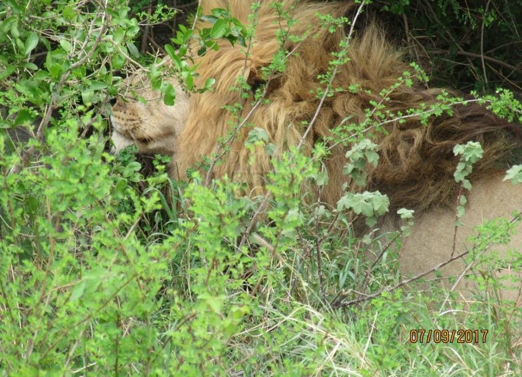 4 Days Maasai Mara Kenya Safari - Lake Nakuru National Park Tour
