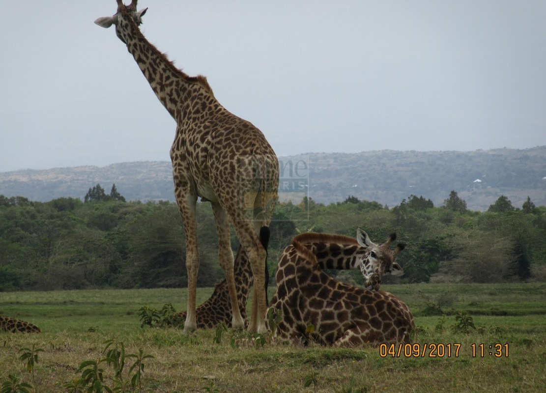 1 Day Kenya Safari to Nairobi City