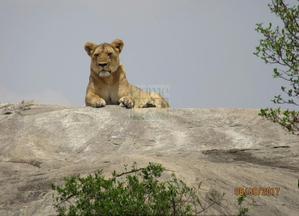 9 Days Kenya Wildlife Safari to Maasai Mara Amboseli & Laikipia