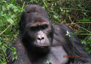 10 Days Rwanda Gorilla,Wildlife & Cultural Safari