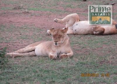 12 Days Samburu, Aberdare, Nakuru, Maasai Mara, Amboseli & Tsavo West
