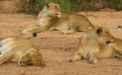 Lunatic Express & Man-Eaters of Tsavo