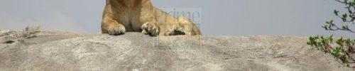 6 Days Kenya Tanzania Wildlife Safari Tour