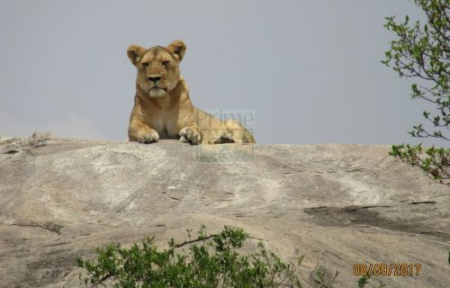 6 Days Kenya Tanzania Wildlife Safari Tour