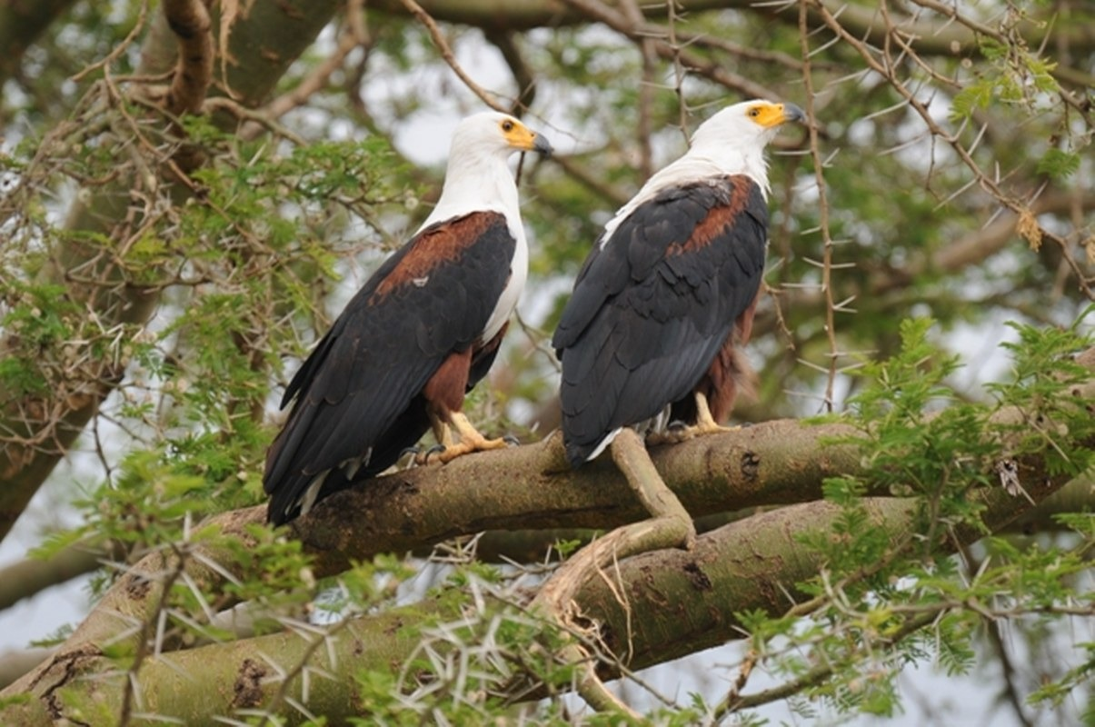 Birding Tours Queen Elizabeth National Park Uganda