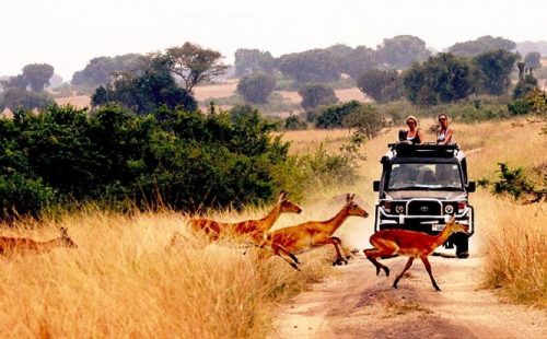 Game Drives Queen Elizabeth National Park Uganda