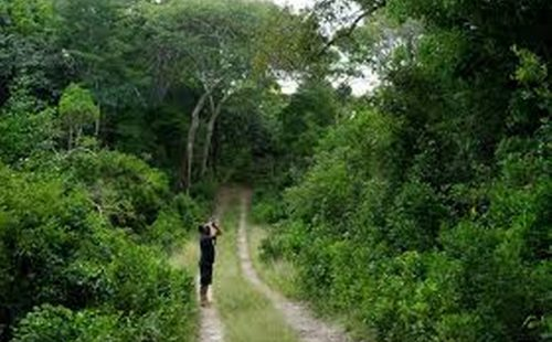 Game Viewing Arabuko-Sokoke Forest National park