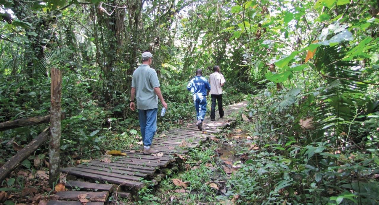 Hiking Safaris on the Bwindi forest