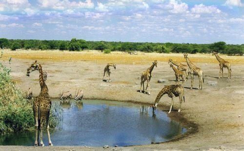 Scenery Malka Mari National Park Kenya
