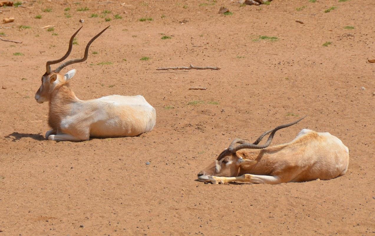 Uganda Kenya Safaris