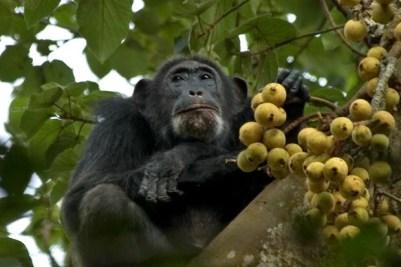 18 Days Uganda Kenya Tanzania Gorilla, Chimpanzee & Wildlife Safari