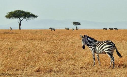 3 Days Tanzania Wildlife Safari to Serengeti National Park