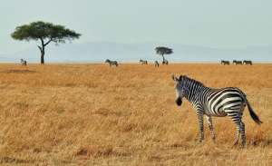 3 Days Tanzania Wildlife Safari to Serengeti National Park